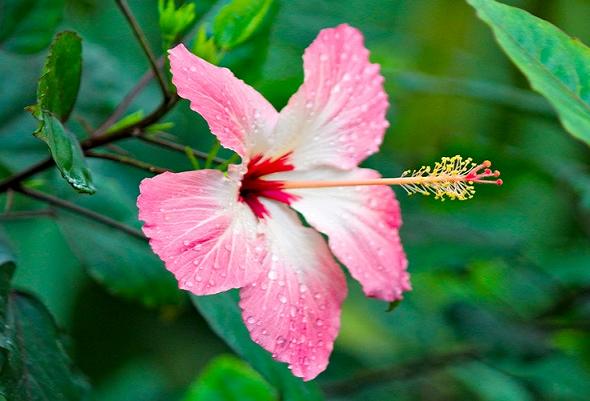 2019 令和元年 沖縄 梅雨入り 時期 いつ 平年 梅雨明け 降水量 気温 対策